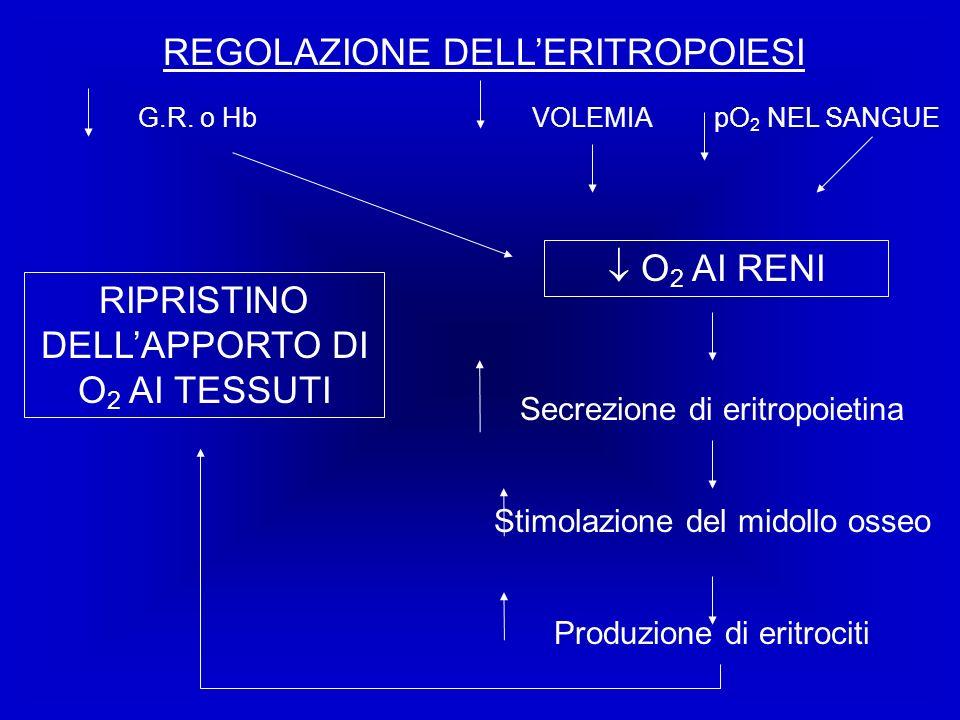 REGOLAZIONE DELLERITROPOIESI VOLEMIApO 2 NEL SANGUEG.R. o Hb O 2 AI RENI RIPRISTINO DELLAPPORTO DI O 2 AI TESSUTI Secrezione di eritropoietina Stimola