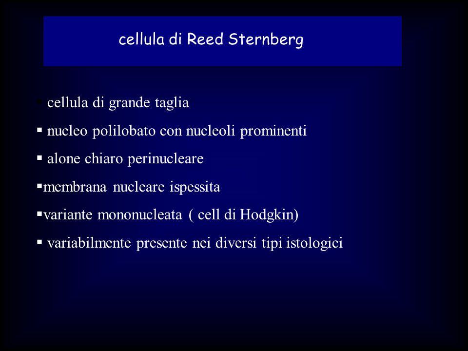 LABORATORIO anemia (nelle fasi avanzate) modesta leucocitosi VES elevata iperuricemia iperfibrinogenemia VES 2 globuline ferritina LDH PCR