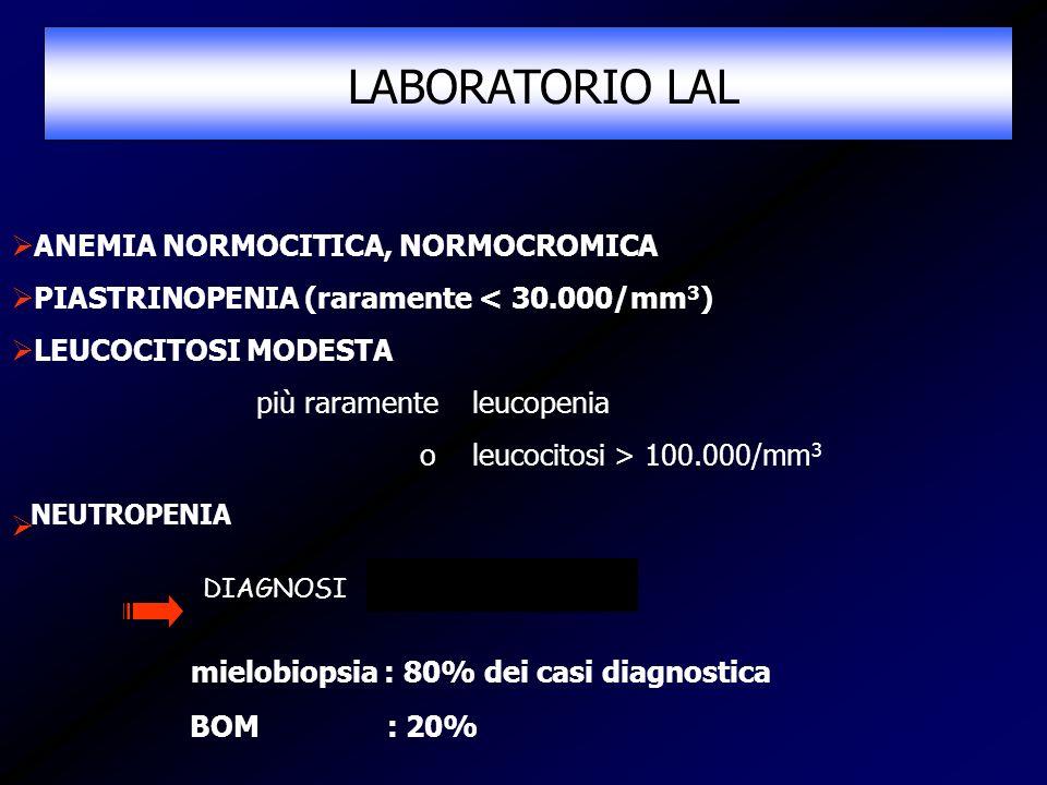 ANEMIA NORMOCITICA, NORMOCROMICA PIASTRINOPENIA (raramente < 30.000/mm 3 ) LEUCOCITOSI MODESTA più raramente leucopenia o leucocitosi > 100.000/mm 3 N