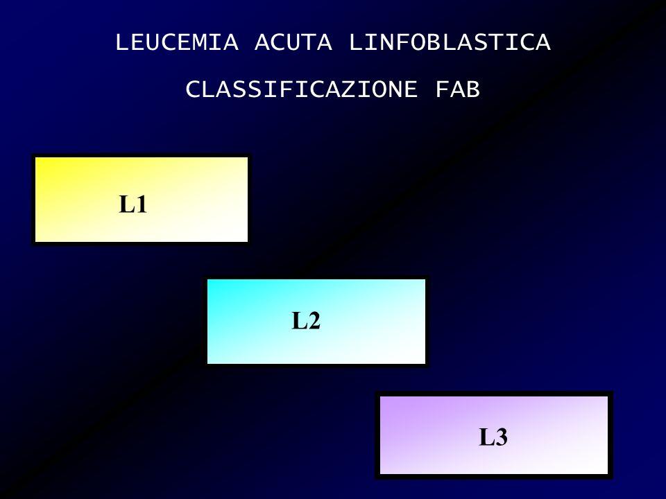 FISIOPATOLOGIA Levento leucemogeno colpisce i B-LINFOCITI in uno stadio di precoce maturazione, quando esprime Immunoglobuline di superficie a bassa densità di tipo IgM e/o IgD (riarrangiamento clonale del gene per la sintesi delle Ig)