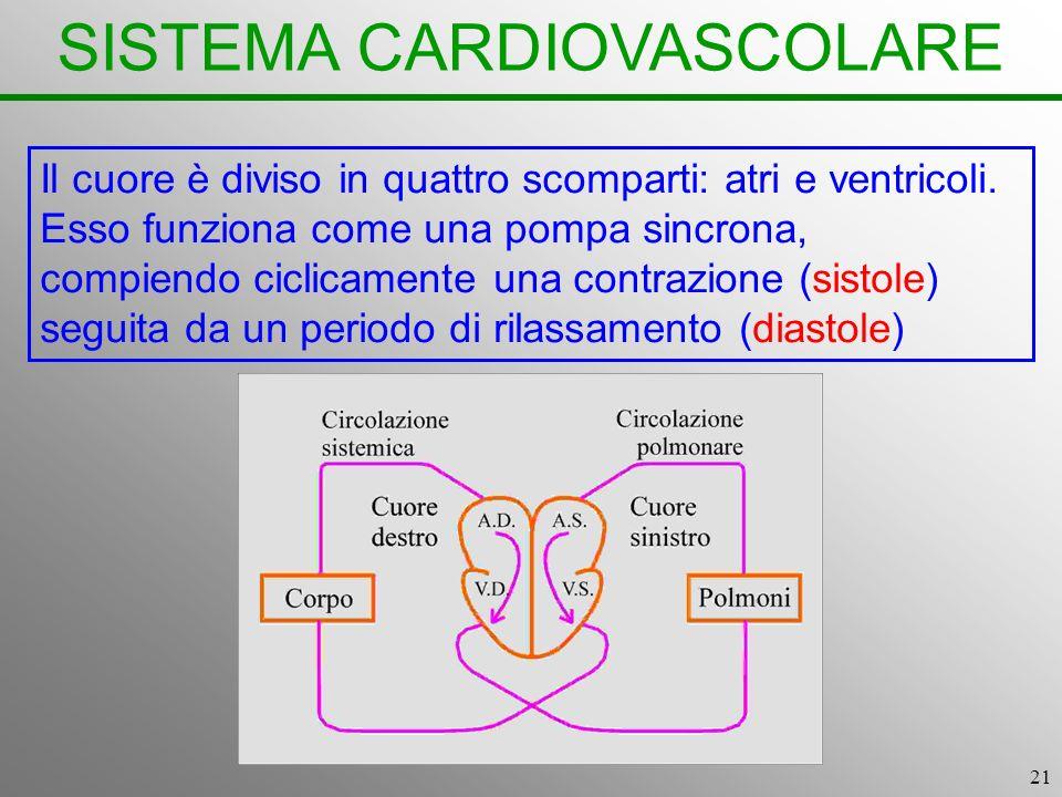 21 SISTEMA CARDIOVASCOLARE Il cuore è diviso in quattro scomparti: atri e ventricoli. Esso funziona come una pompa sincrona, compiendo ciclicamente un