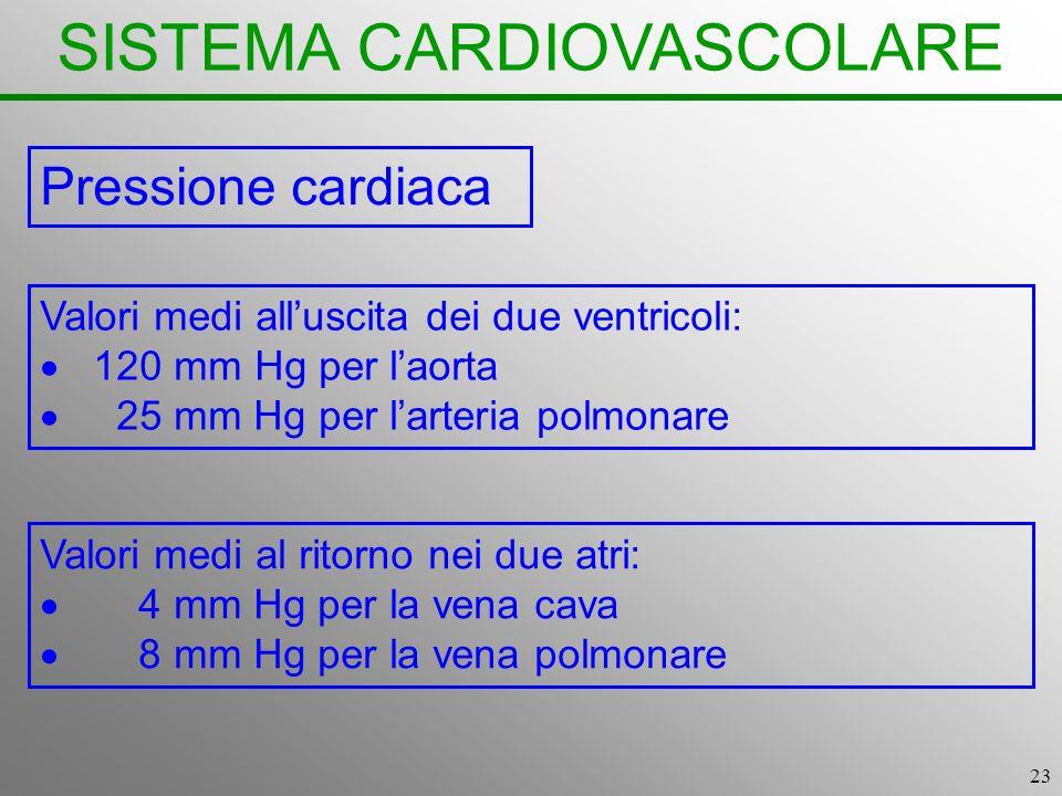 23 SISTEMA CARDIOVASCOLARE Pressione cardiaca Valori medi alluscita dei due ventricoli: 120 mm Hg per laorta 25 mm Hg per larteria polmonare Valori me