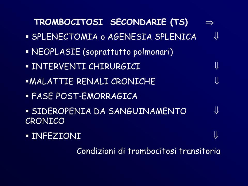 TROMBOCITOSI SECONDARIE (TS) SPLENECTOMIA o AGENESIA SPLENICA NEOPLASIE (soprattutto polmonari) INTERVENTI CHIRURGICI MALATTIE RENALI CRONICHE FASE POST-EMORRAGICA SIDEROPENIA DA SANGUINAMENTO CRONICO INFEZIONI Condizioni di trombocitosi transitoria