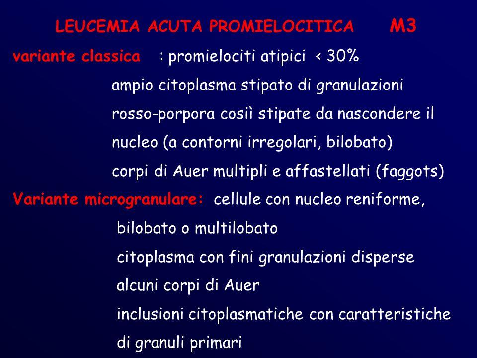 LEUCEMIA ACUTA PROMIELOCITICA M3 variante classica : promielociti atipici < 30% ampio citoplasma stipato di granulazioni rosso-porpora cosiì stipate da nascondere il nucleo (a contorni irregolari, bilobato) corpi di Auer multipli e affastellati (faggots) Variante microgranulare: cellule con nucleo reniforme, bilobato o multilobato citoplasma con fini granulazioni disperse alcuni corpi di Auer inclusioni citoplasmatiche con caratteristiche di granuli primari