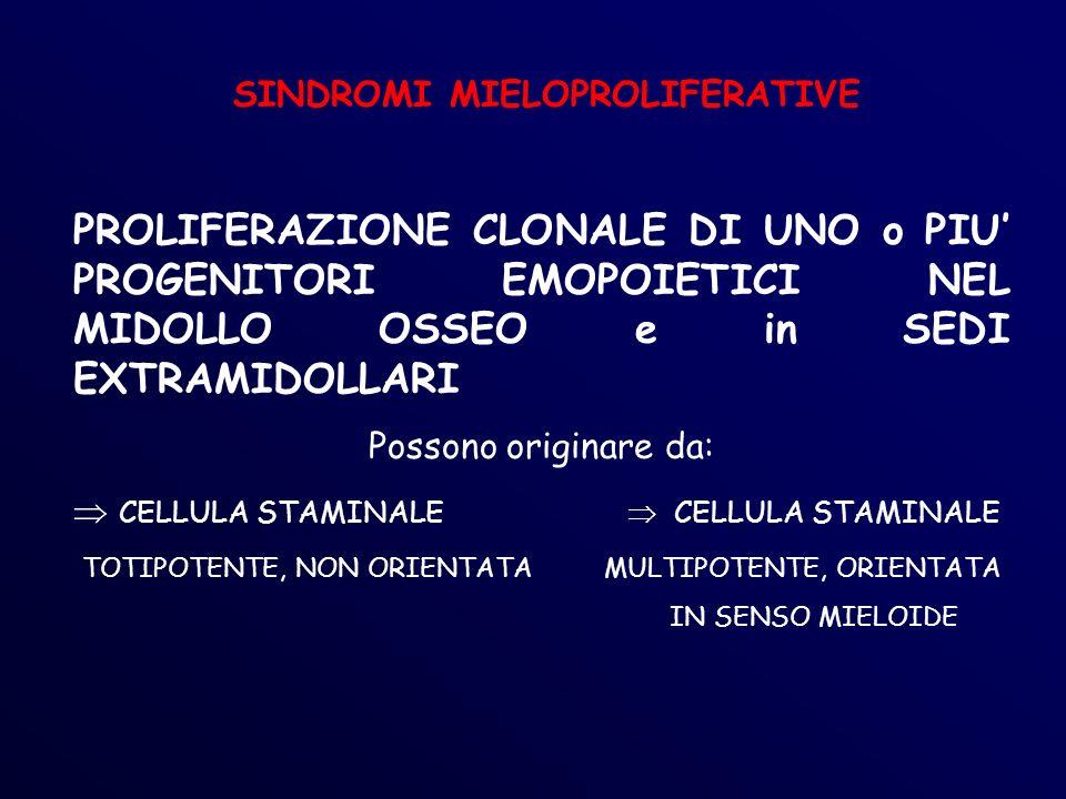 SINDROMI MIELOPROLIFERATIVE PROLIFERAZIONE CLONALE DI UNO o PIU PROGENITORI EMOPOIETICI NEL MIDOLLO OSSEO e in SEDI EXTRAMIDOLLARI Possono originare da: CELLULA STAMINALE CELLULA STAMINALE TOTIPOTENTE, NON ORIENTATA MULTIPOTENTE, ORIENTATA IN SENSO MIELOIDE