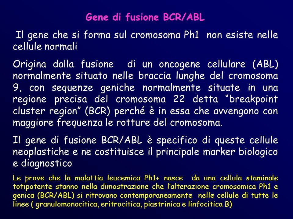 Gene di fusione BCR/ABL Il gene che si forma sul cromosoma Ph1 non esiste nelle cellule normali Origina dalla fusione di un oncogene cellulare (ABL) normalmente situato nelle braccia lunghe del cromosoma 9, con sequenze geniche normalmente situate in una regione precisa del cromosoma 22 detta breakpoint cluster region (BCR) perché è in essa che avvengono con maggiore frequenza le rotture del cromosoma.