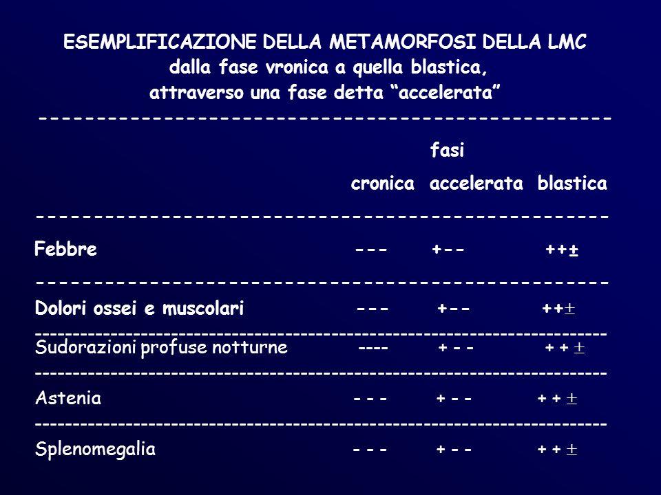 ESEMPLIFICAZIONE DELLA METAMORFOSI DELLA LMC dalla fase vronica a quella blastica, attraverso una fase detta accelerata --------------------------------------------------- fasi cronica accelerata blastica --------------------------------------------------- Febbre ---+-- ++± --------------------------------------------------- Dolori ossei e muscolari --- +-- ++ --------------------------------------------------------------------------- Sudorazioni profuse notturne ---- + - - + + --------------------------------------------------------------------------- Astenia - - - + - - + + --------------------------------------------------------------------------- Splenomegalia - - - + - - + +