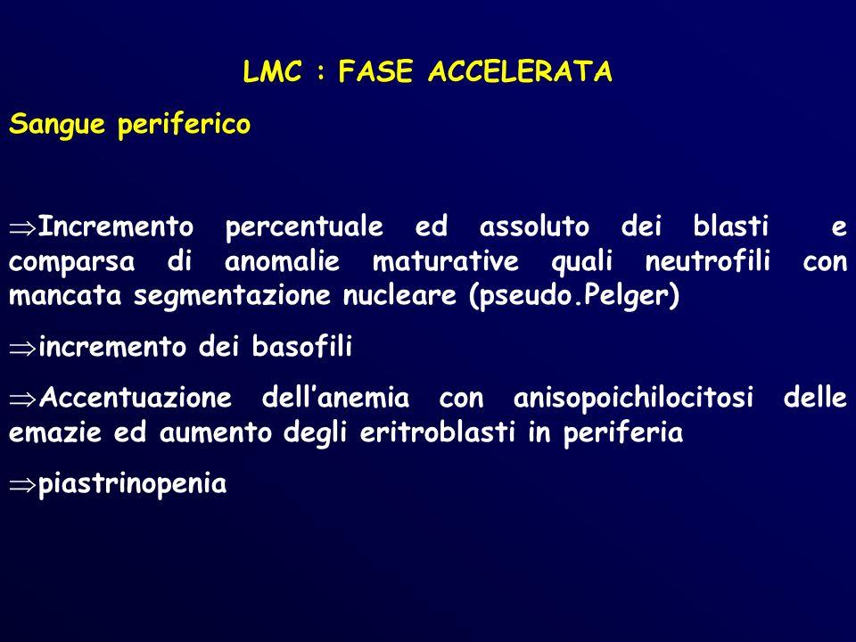 LMC : FASE ACCELERATA Sangue periferico Incremento percentuale ed assoluto dei blasti e comparsa di anomalie maturative quali neutrofili con mancata segmentazione nucleare (pseudo.Pelger) incremento dei basofili Accentuazione dellanemia con anisopoichilocitosi delle emazie ed aumento degli eritroblasti in periferia piastrinopenia