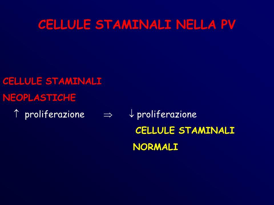 CELLULE STAMINALI NELLA PV CELLULE STAMINALI NEOPLASTICHE proliferazione proliferazione CELLULE STAMINALI NORMALI