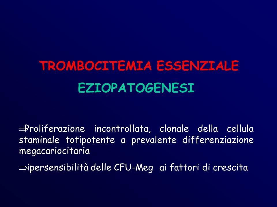 TROMBOCITEMIA ESSENZIALE EZIOPATOGENESI Proliferazione incontrollata, clonale della cellula staminale totipotente a prevalente differenziazione megacariocitaria ipersensibilità delle CFU-Meg ai fattori di crescita