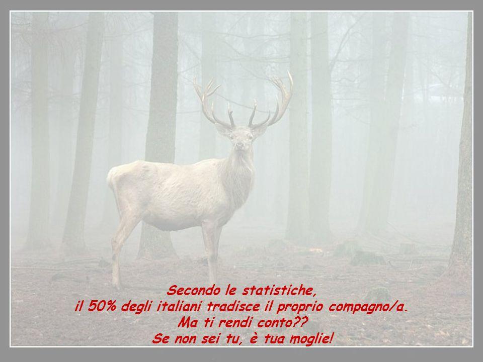 Secondo le statistiche, il 50% degli italiani tradisce il proprio compagno/a.