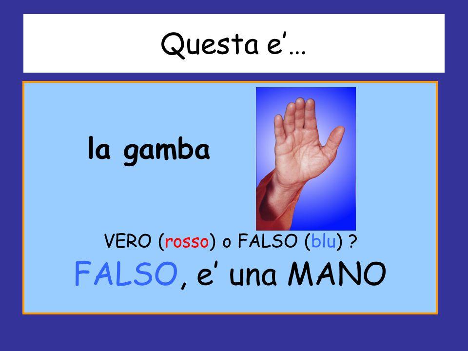Questa e… la gamba VERO (rosso) o FALSO (blu) ? FALSO, e una MANO
