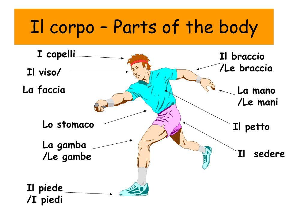 Il corpo – Parts of the body I capelli Il viso/ La faccia La mano /Le mani Il braccio /Le braccia La gamba /Le gambe Il piede /I piedi Lo stomaco Il p
