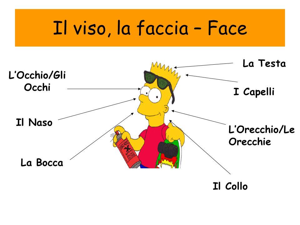 Il viso, la faccia – Face I Capelli LOcchio/Gli Occhi Il Naso LOrecchio/Le Orecchie La Bocca Il Collo La Testa