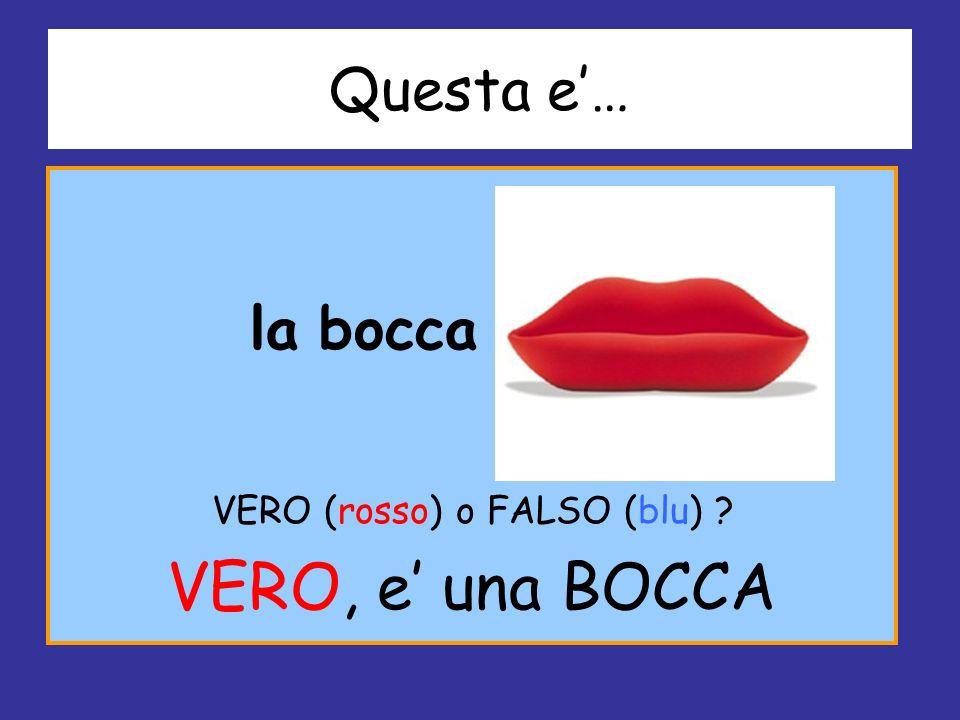 Questa e… la bocca VERO (rosso) o FALSO (blu) ? VERO, e una BOCCA
