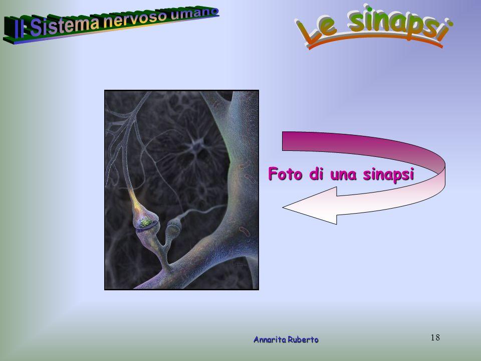 18 Annarita Ruberto Foto di una sinapsi