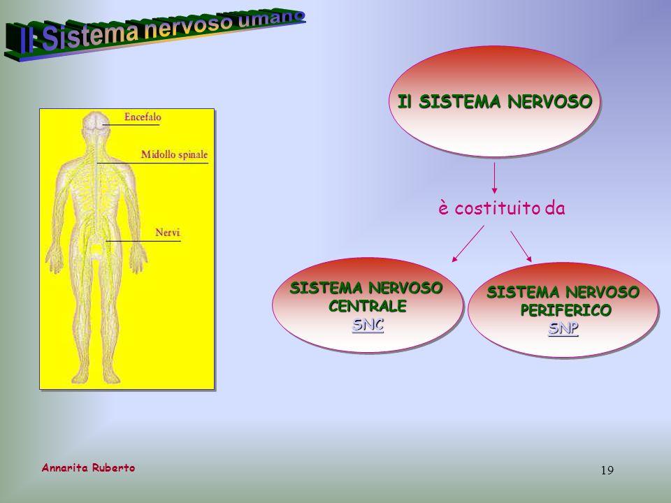 19 Il SISTEMA NERVOSO Annarita Ruberto è costituito da SISTEMA NERVOSO CENTRALE SNC SISTEMA NERVOSO CENTRALE SNC SISTEMA NERVOSO PERIFERICO PERIFERICO