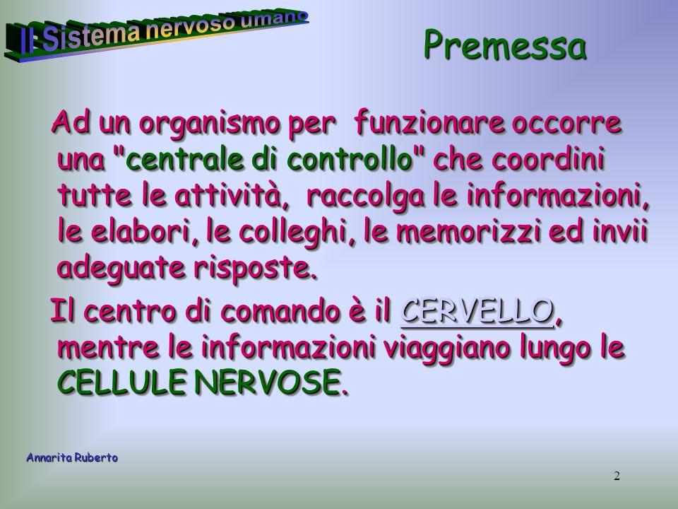 23 Lencefalo (cervello, cervelletto e midollo allungato) e il midollo spinale sono avvolti da tre membrane sovrapposte.