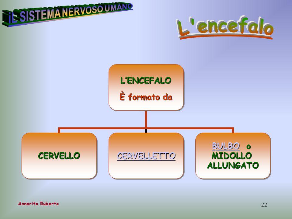 22 Annarita RubertoLENCEFALO È formato da CERVELLO CERVELLETTO BULBOBULBO o BULBOMIDOLLOALLUNGATO