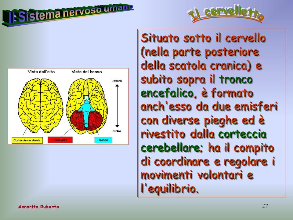 27 Situato sotto il cervello (nella parte posteriore della scatola cranica) e subito sopra il tronco encefalico, è formato anch'esso da due emisferi c