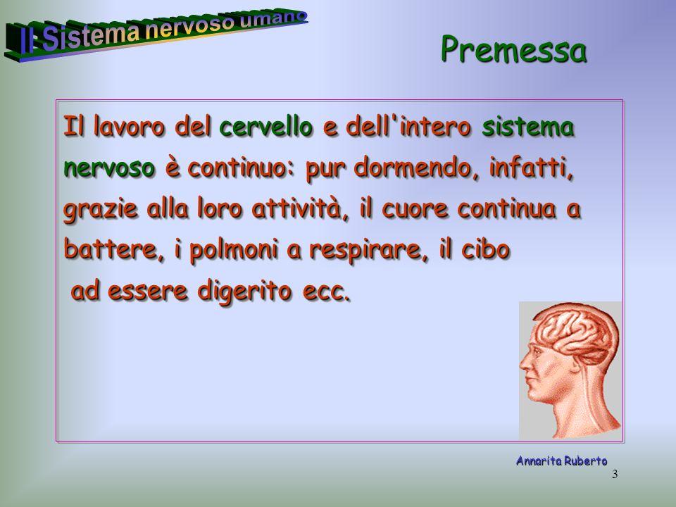 3 Il lavoro del cervello e dell'intero sistema nervoso è continuo: pur dormendo, infatti, grazie alla loro attività, il cuore continua a battere, i po