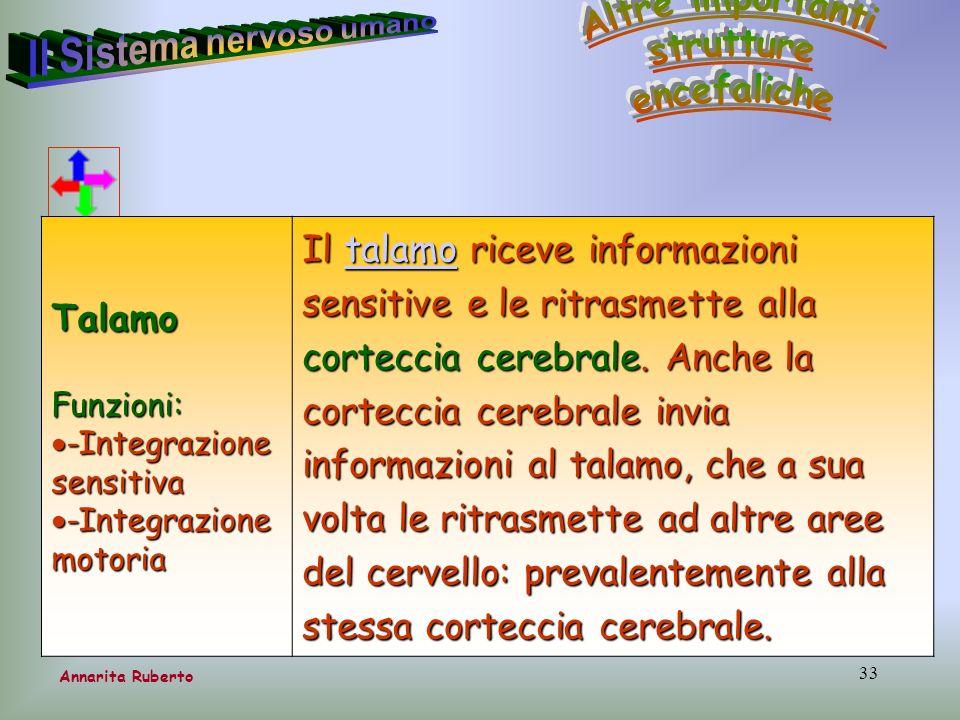 33 Annarita RubertoTalamoFunzioni: -Integrazione sensitiva -Integrazione sensitiva -Integrazione motoria -Integrazione motoria Il talamo riceve inform