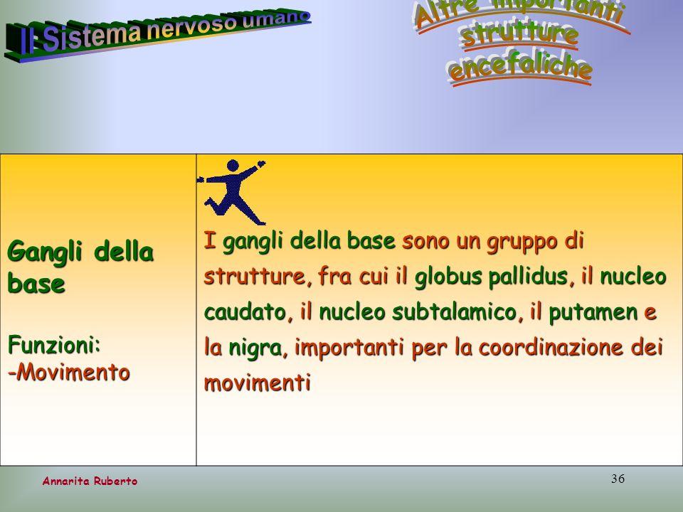 36 Annarita Ruberto Gangli della base Funzioni:-Movimento I gangli della base sono un gruppo di strutture, fra cui il globus pallidus, il nucleo cauda