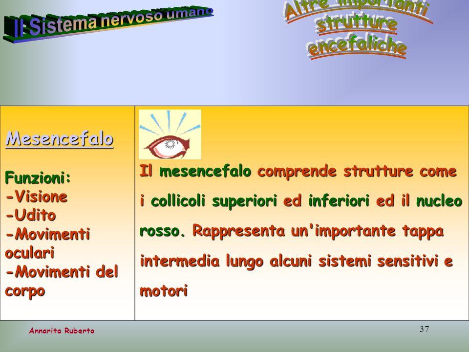 37 Annarita Ruberto Mesencefalo Funzioni:-Visione-Udito -Movimenti oculari -Movimenti del corpo Il mesencefalo comprende strutture come i collicoli su