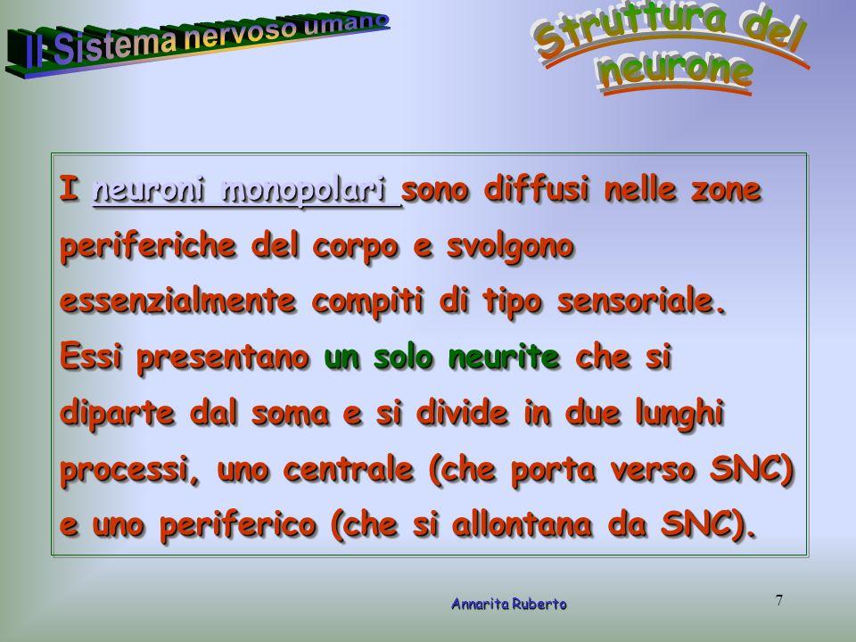 48 Annarita Ruberto La figura mostra lorganizzazione generale del sistema nervoso autonomo.
