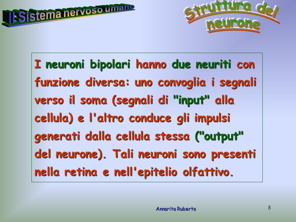 8 Annarita Ruberto I neuroni bipolari hanno due neuriti con funzione diversa: uno convoglia i segnali verso il soma (segnali di