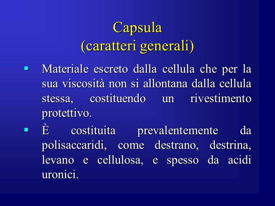 Capsula (caratteri generali) Materiale escreto dalla cellula che per la sua viscosità non si allontana dalla cellula stessa, costituendo un rivestimen