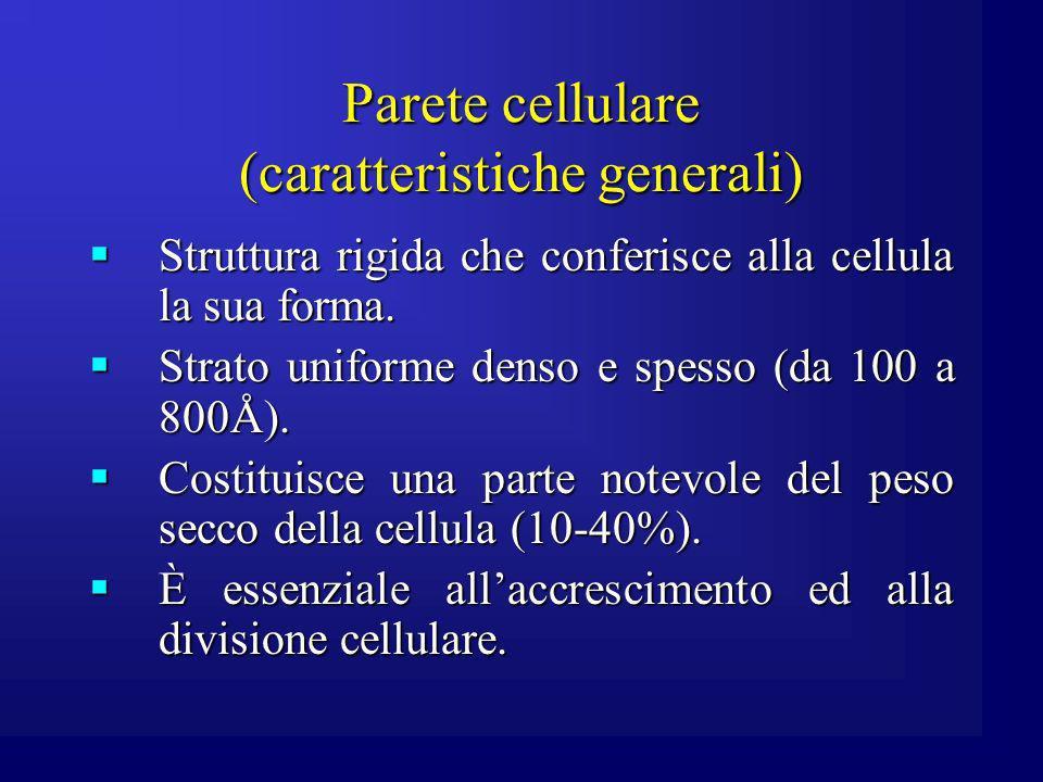Parete cellulare (caratteristiche generali) Struttura rigida che conferisce alla cellula la sua forma. Struttura rigida che conferisce alla cellula la