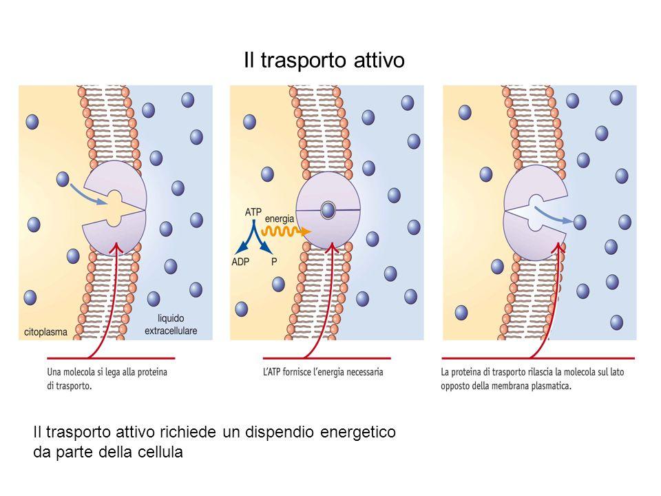 Lupia Palmieri, Parotto, Saraceni, Strumia, Scienze integrate © Zanichelli editore 2010 Il trasporto attivo Il trasporto attivo richiede un dispendio energetico da parte della cellula