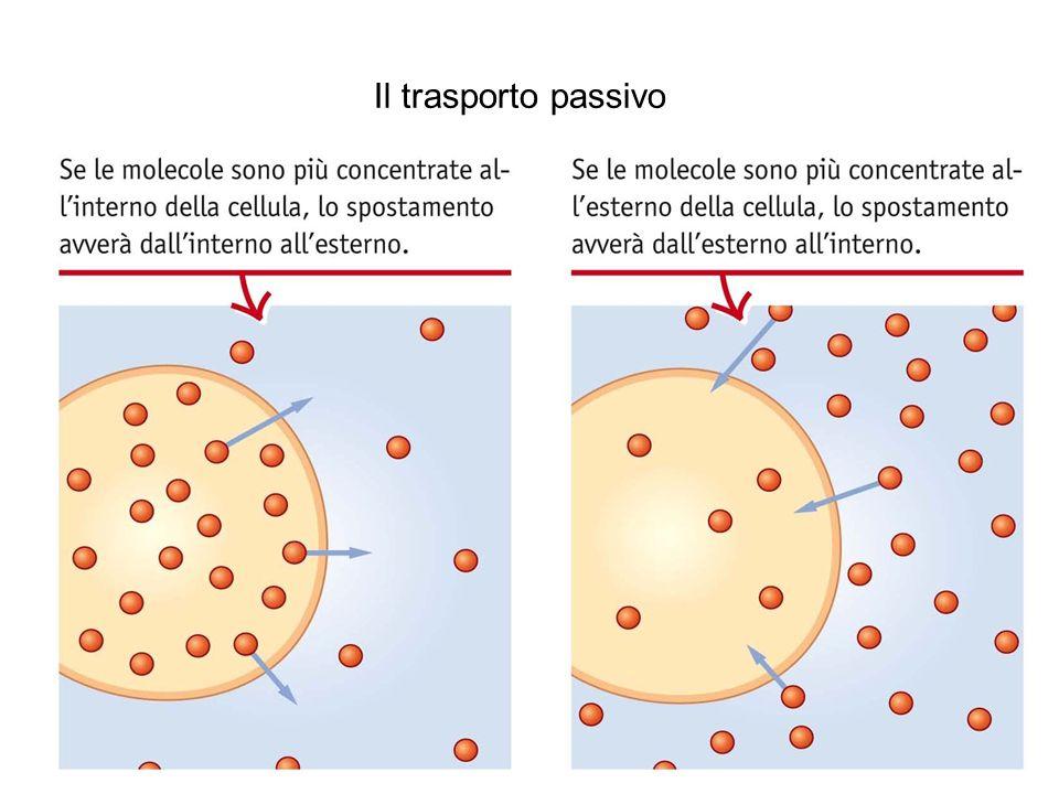 Lupia Palmieri, Parotto, Saraceni, Strumia, Scienze integrate © Zanichelli editore 2010 Il trasporto passivo Il processo di diffusione