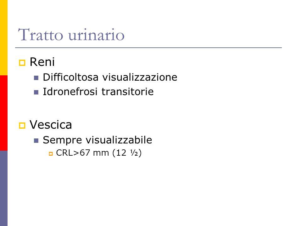 Tratto urinario Reni Difficoltosa visualizzazione Idronefrosi transitorie Vescica Sempre visualizzabile CRL>67 mm (12 ½)