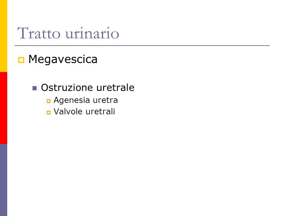 Tratto urinario Megavescica Ostruzione uretrale Agenesia uretra Valvole uretrali