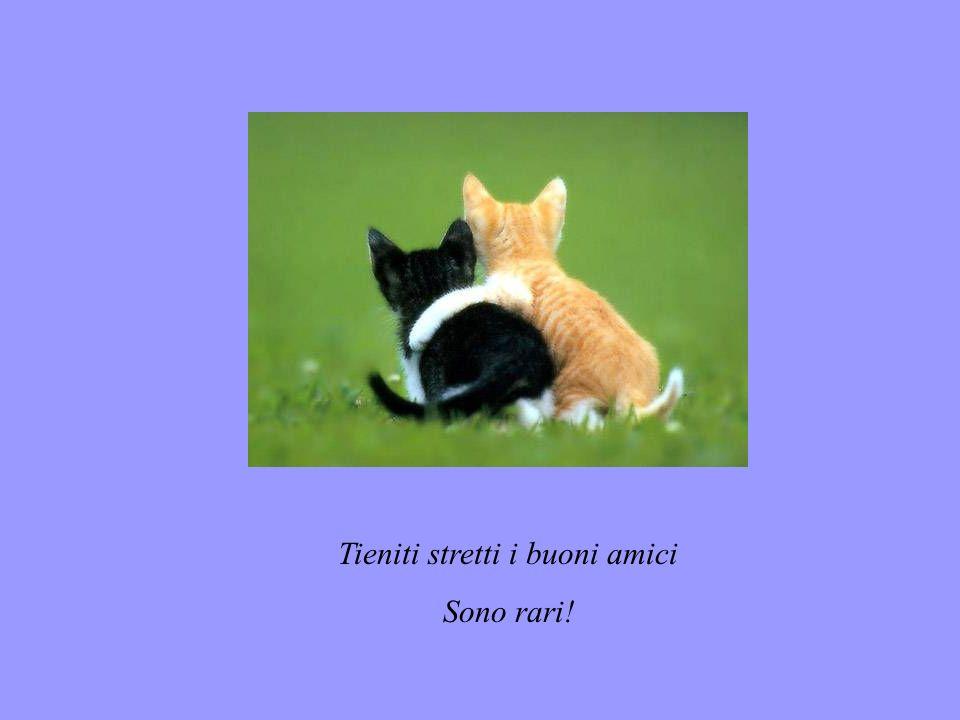 Tieniti stretti i buoni amici Sono rari!