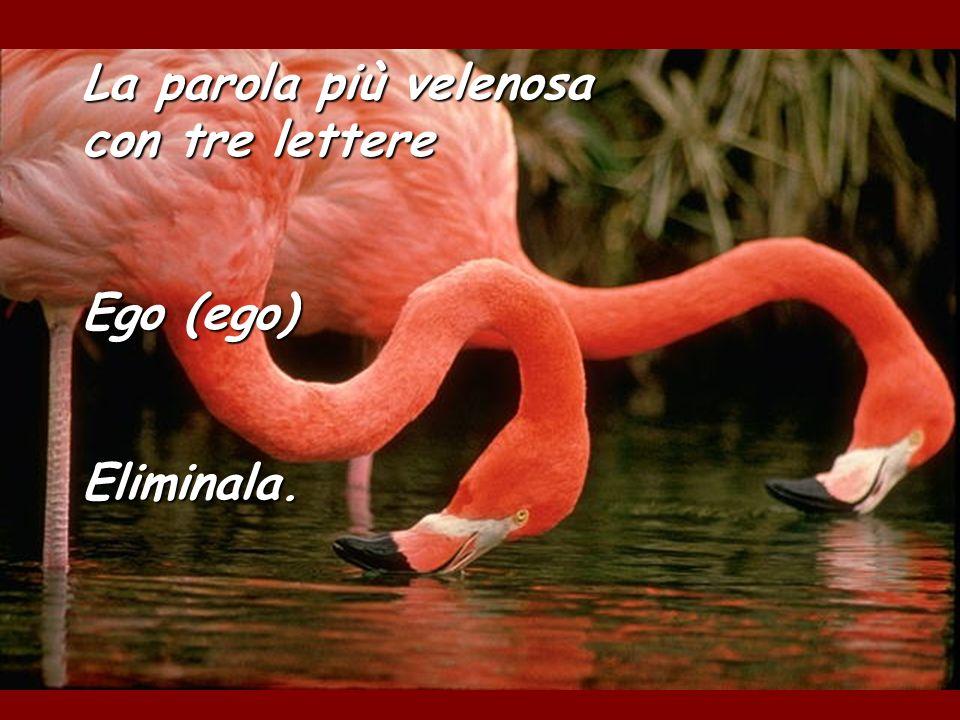 La parola più velenosa con tre lettere Ego (ego) Eliminala.
