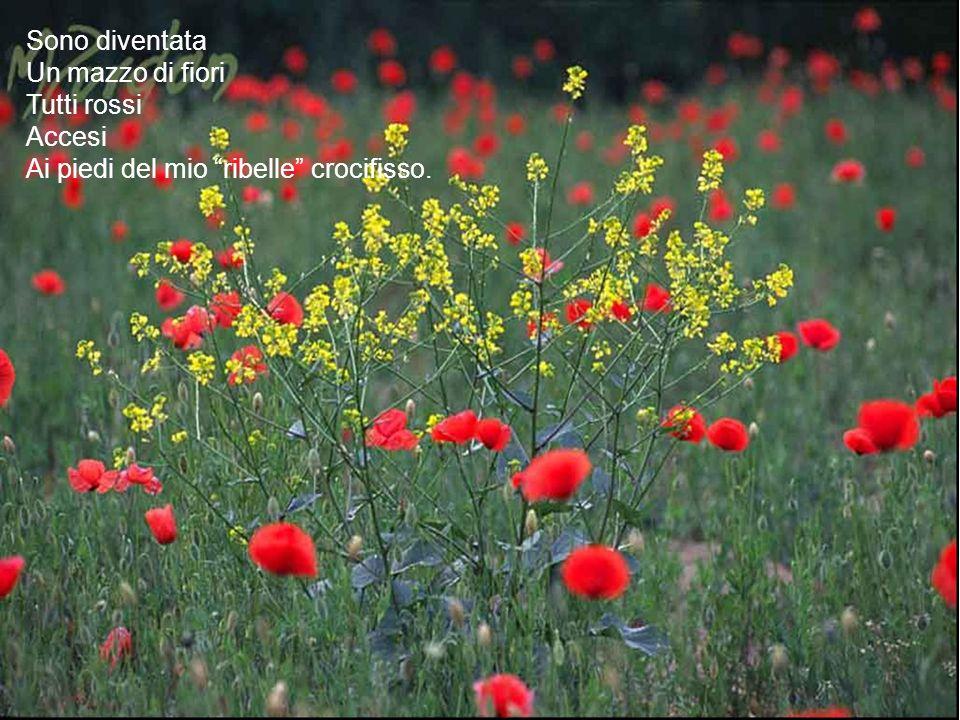 Sono diventata Un mazzo di fiori Tutti rossi Accesi Ai piedi del mio ribelle crocifisso.
