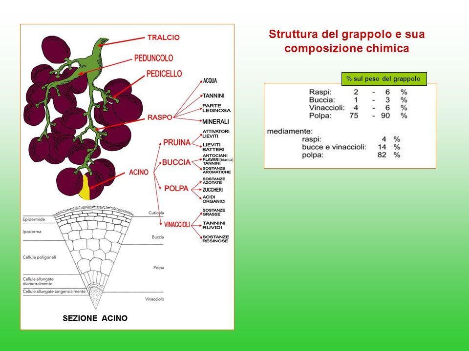Struttura del grappolo e sua composizione chimica % sul peso del grappolo
