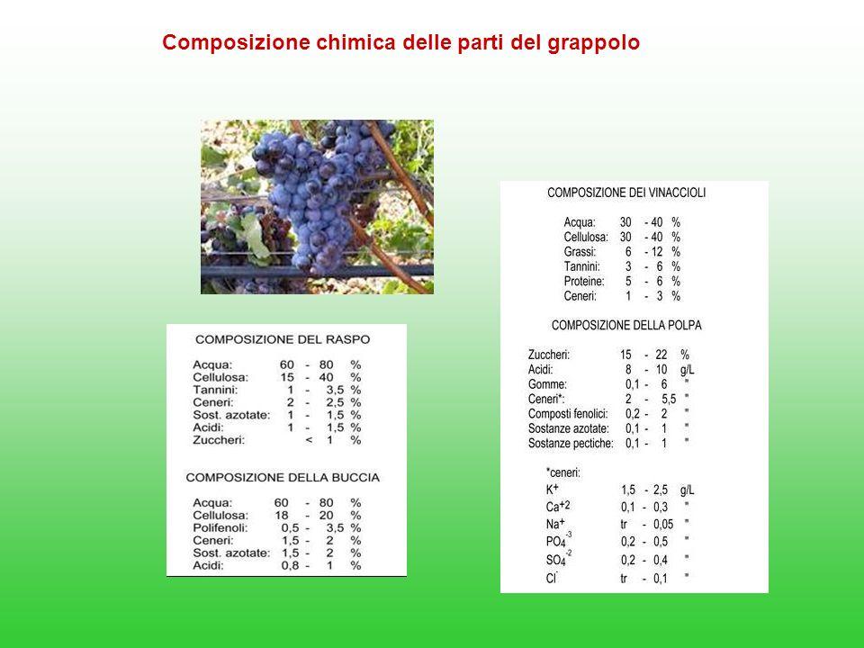 Composizione chimica delle parti del grappolo