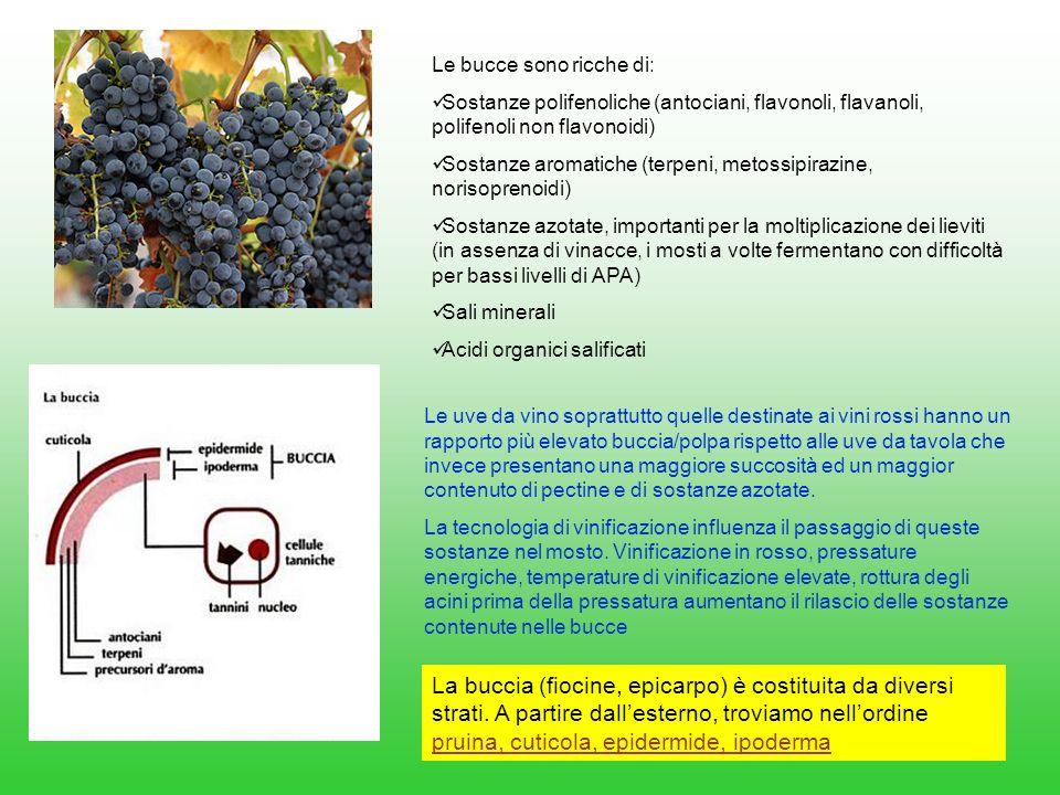 Le bucce sono ricche di: Sostanze polifenoliche (antociani, flavonoli, flavanoli, polifenoli non flavonoidi) Sostanze aromatiche (terpeni, metossipira
