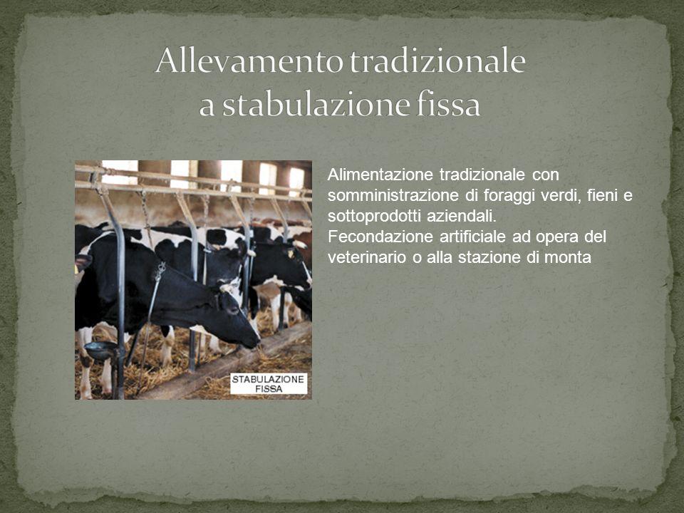Alimentazione tradizionale con somministrazione di foraggi verdi, fieni e sottoprodotti aziendali.