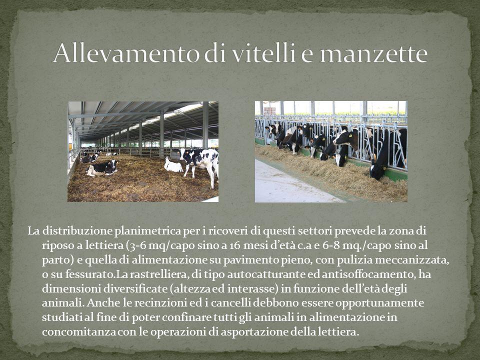 Dopo il periodo di condizionamento alla vita sociale, alletà di circa 6 mesi, è possibile formare gruppi di vitelli e manze più numerosi ospitandoli i