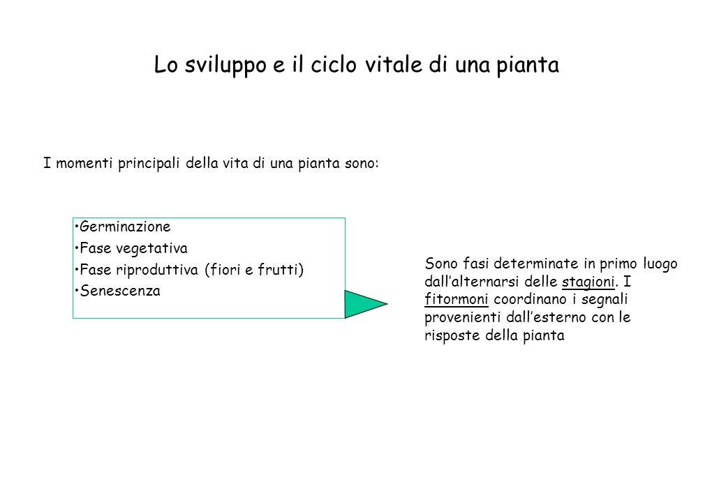 Germinazione Fase vegetativa Fase riproduttiva (fiori e frutti) Senescenza I momenti principali della vita di una pianta sono: Sono fasi determinate i