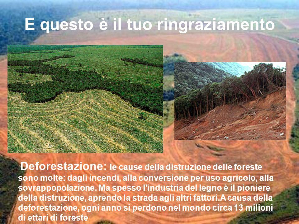 E questo è il tuo ringraziamento Deforestazione: le cause della distruzione delle foreste sono molte: dagli incendi, alla conversione per uso agricolo