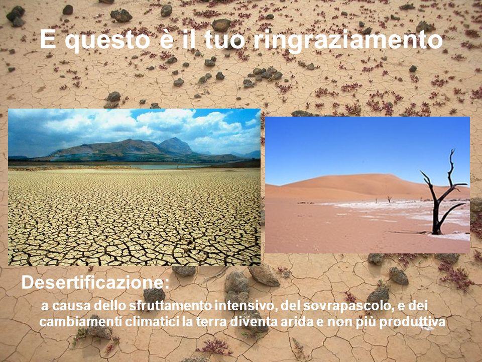 E questo è il tuo ringraziamento Desertificazione: a causa dello sfruttamento intensivo, del sovrapascolo, e dei cambiamenti climatici la terra diventa arida e non più produttiva
