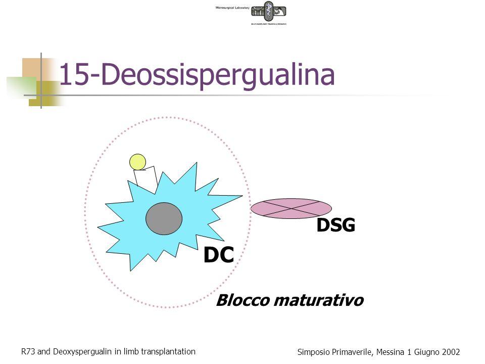 R73 and Deoxyspergualin in limb transplantation Simposio Primaverile, Messina 1 Giugno 2002 15-Deossispergualina Analogo di sintesi della spergualina Meccanismo di azione: Blocco NF-kB Somministrazione (ratto): bolo intraperitoneale Somministrazione (uomo): bolo e.v.