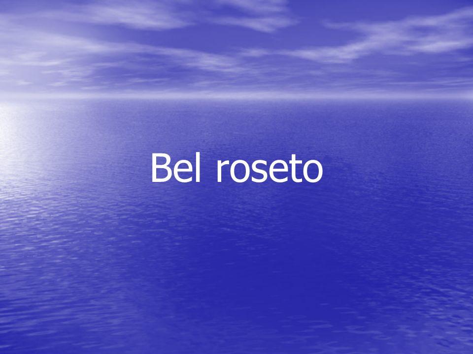 Bel roseto