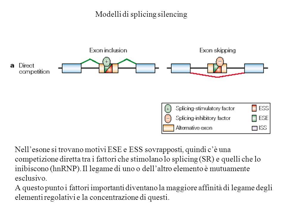 Modelli di splicing silencing Nellesone si trovano motivi ESE e ESS sovrapposti, quindi cè una competizione diretta tra i fattori che stimolano lo spl